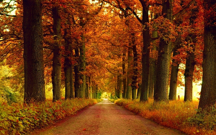 lovely-autumn